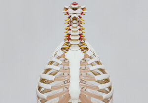 Anatomy 300x209